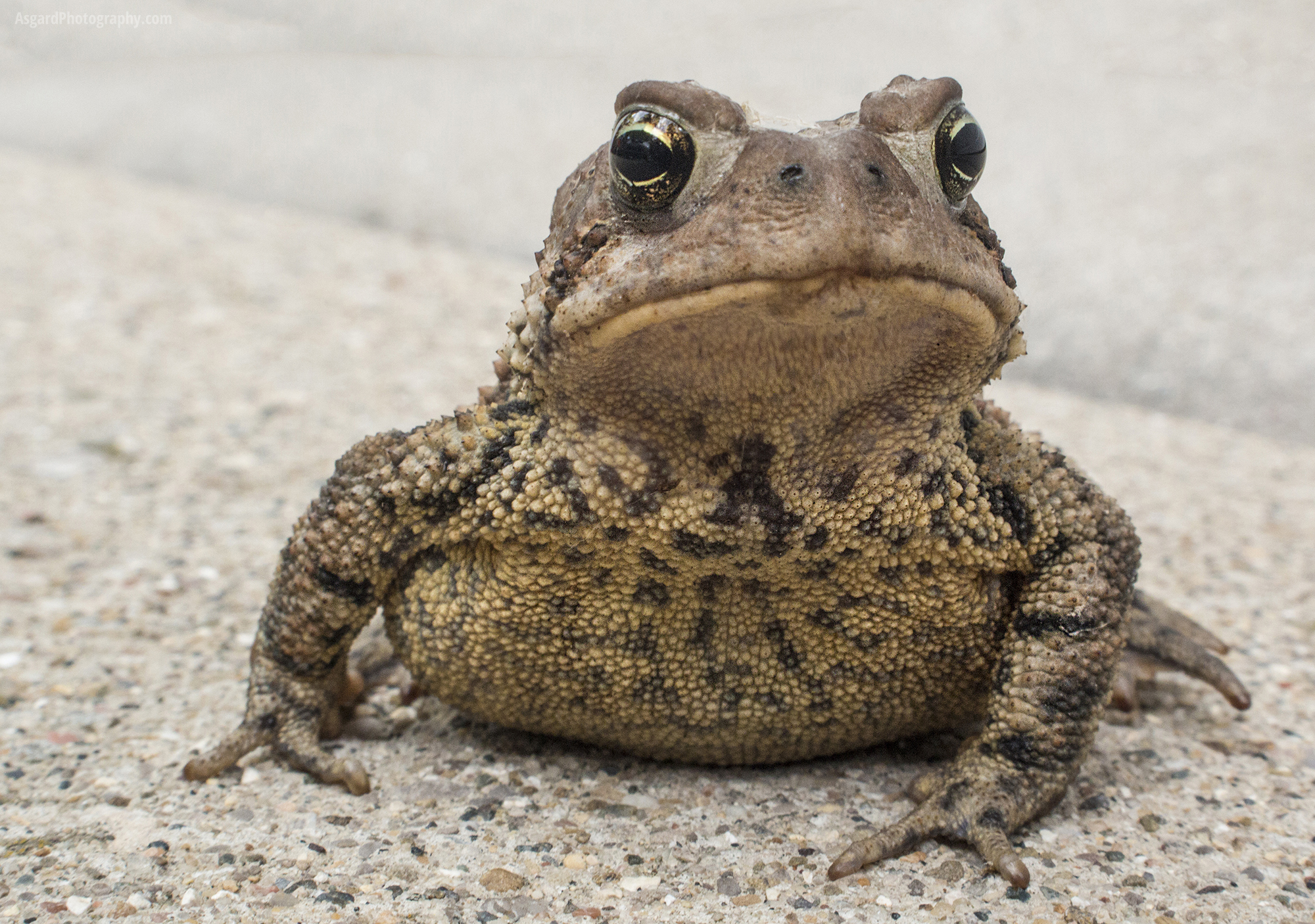 toad on the road asgard photography